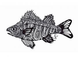 blackandwhitefish-blog