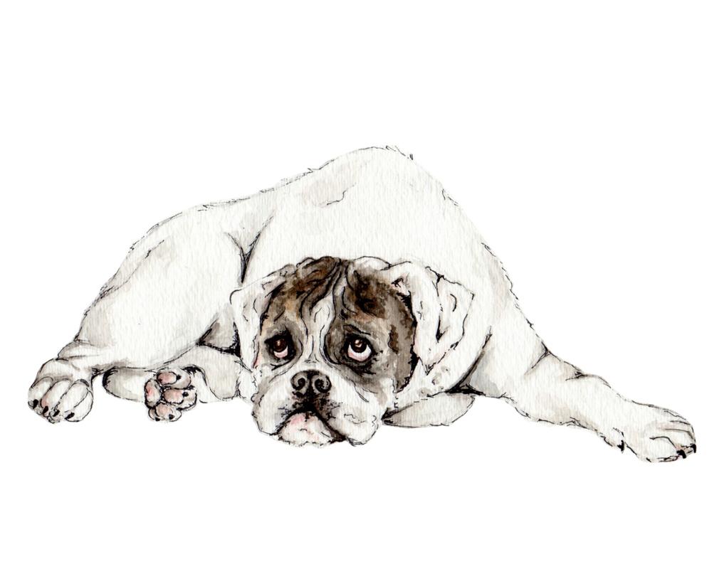 dog_1